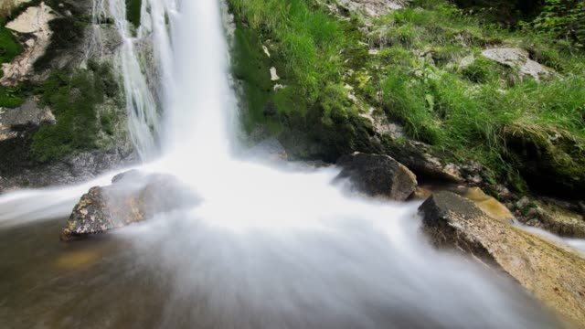 timelapse of river water in forest - baden wurttemberg stock videos and b-roll footage