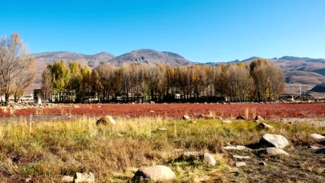 zeitraffer von sangdui rote wiese mit ginkgo-baum im herbst bei daocheng, china - besichtigung stock-videos und b-roll-filmmaterial