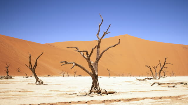 vídeos de stock, filmes e b-roll de tl, ws timelapse of shadows from trees moving at dead vlei - dry