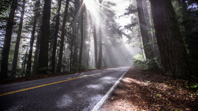 timelapse of skyline boulevard in morning mist - fog stock videos & royalty-free footage