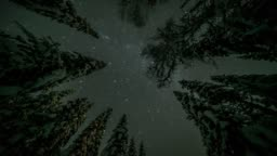Timelapse of stars above forest