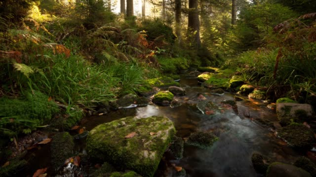 timelapse of sun through forest - baden wurttemberg stock videos and b-roll footage