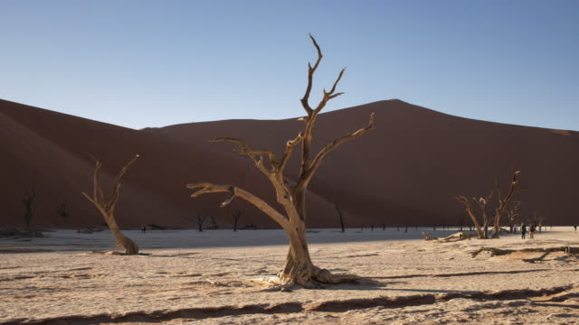 vídeos de stock, filmes e b-roll de tl, ws timelapse of sunlight moving across the trees at dead vlei - beauty in nature