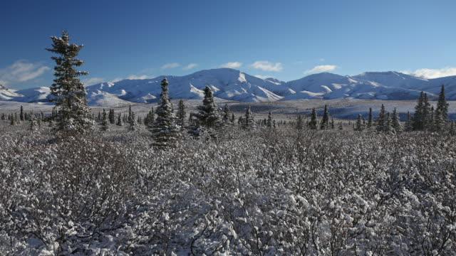 time-lapse of taiga (boreal) forest,å denali national park, alaska - taiga stock videos and b-roll footage