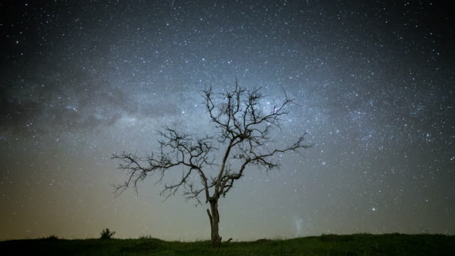 timelapse of tree at night - árvore stock videos and b-roll footage