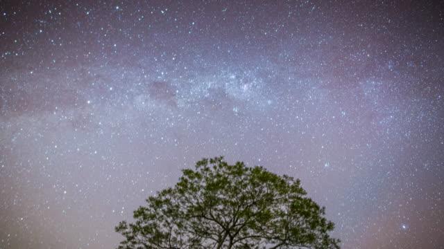vídeos de stock, filmes e b-roll de timelapse of tree at night - trilha passagem de pedestres