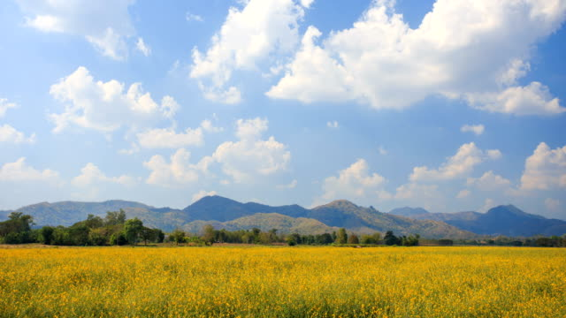 4K Time-lapse of Yellow meadow and blue sky.