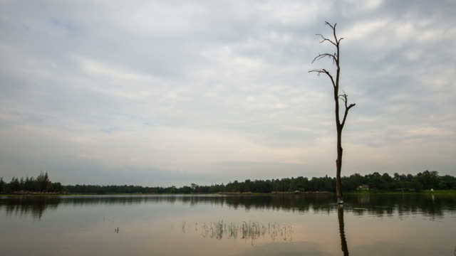 Time-Lapse Paning Cloud Moving Over Lake with dead tree