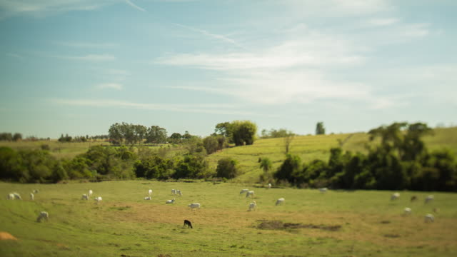 timelapse - pasture and livestock - flock of sheep stock videos & royalty-free footage