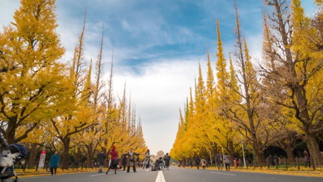 4 k zeitraffer: fußgänger drängten sich im zeitraffer: aoyama meiji jingu garten tokyo japan, apple prores 422 (hq) 3840 x 2160-format - ginkgobaum stock-videos und b-roll-filmmaterial