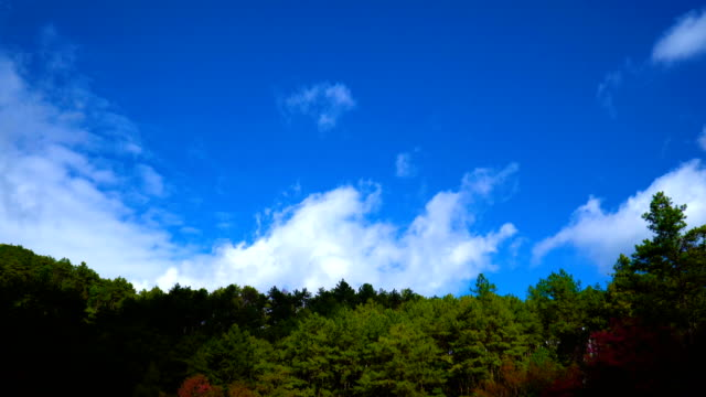 4K Timelapse - Pine Forest with Moving Cloud