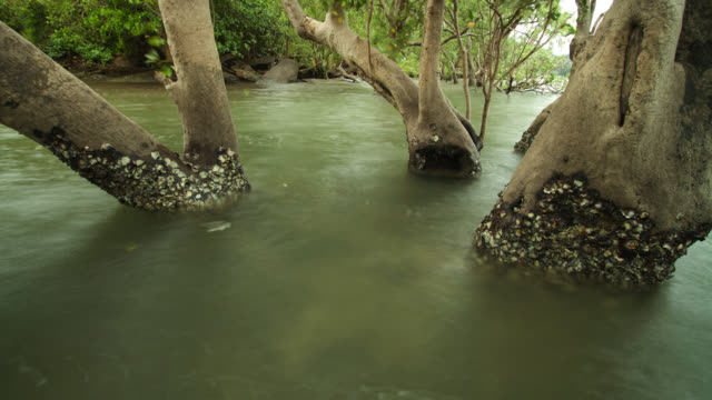 """timelapse receding tide exposes mangrove forest, thailand"" - tide stock videos & royalty-free footage"
