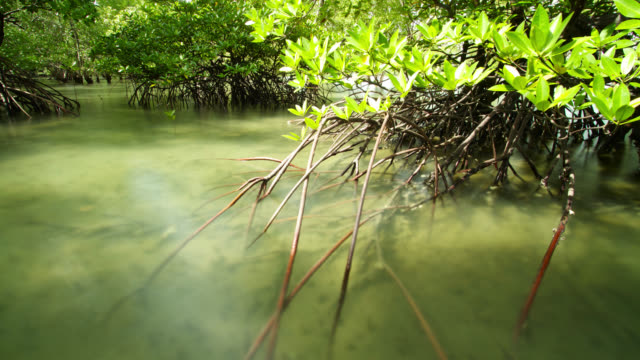 """timelapse receding tide exposes mangrove forest, thailand"" - receding tide stock videos & royalty-free footage"