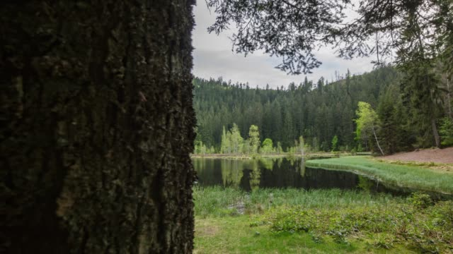 timelapse reveal from behind tree of pond and forest - baden wurttemberg stock videos and b-roll footage