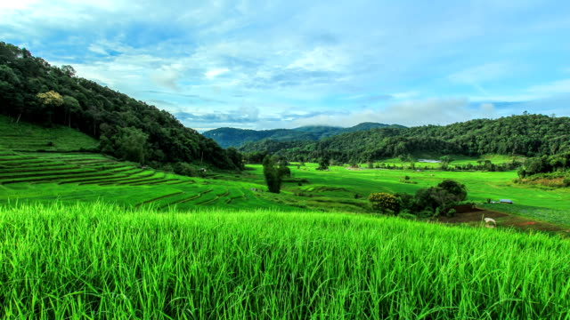Timelapse Rice Terraces in Northern of Thailand