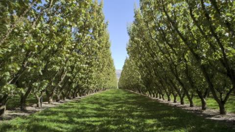 vídeos y material grabado en eventos de stock de time-lapse sequence showing all for seasons in an apricot orchard - estación entorno y ambiente