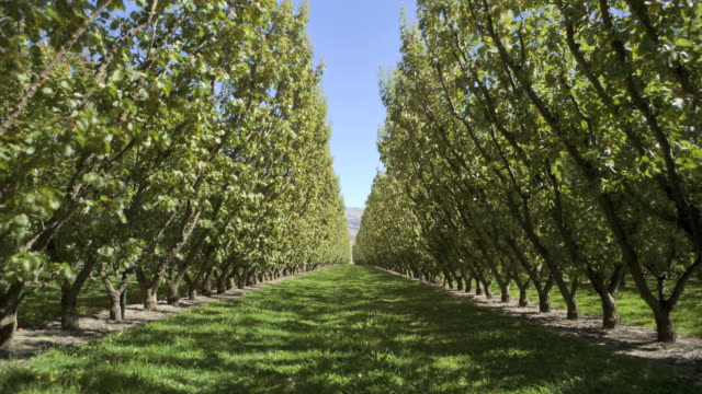 stockvideo's en b-roll-footage met time-lapse sequence showing all for seasons in an apricot orchard - boomgaard
