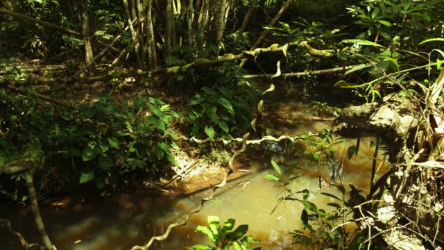 vídeos de stock, filmes e b-roll de timelapse shadows shift over rainforest floor and stream, megatha, myanmar - trepadeira