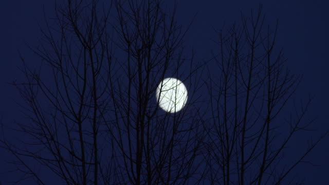 timelapse shot of a silhouette of a tree with the rising moon in the background - wisconsin stock videos & royalty-free footage