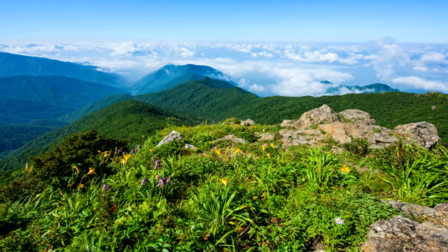 time-lapse shot of breeze blowing on green plants with few yellow flowers on mt chirisan national park (famous travel destinations in south korea) and the cloud filling background - idyllic stock videos & royalty-free footage