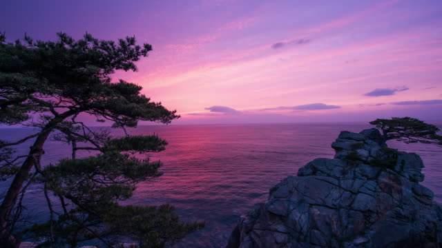 Time-Lapse shot of Pine Tree at Hajodae Beach (popular travel destination) under light purple sky in the early morning