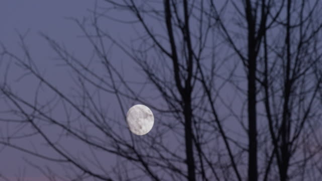 timelapse shot of the moon rising with a tree silhouette in the foreground - full moon stock videos & royalty-free footage