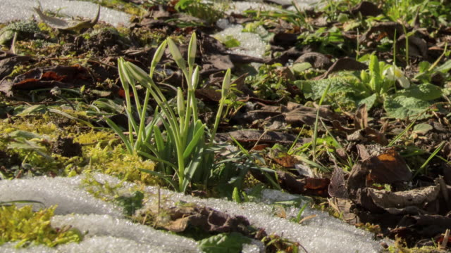 timelapse snowdrops - snowdrop stock videos and b-roll footage