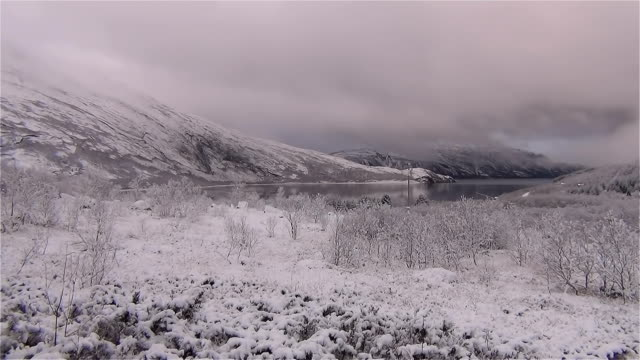 ロック ダウンされている森の中でタイムラプス吹雪 - 北欧諸国点の映像素材/bロール