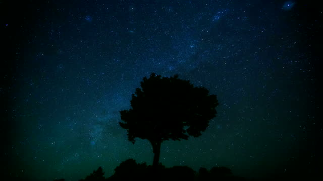 HD Time-lapse: Star Trail with tree