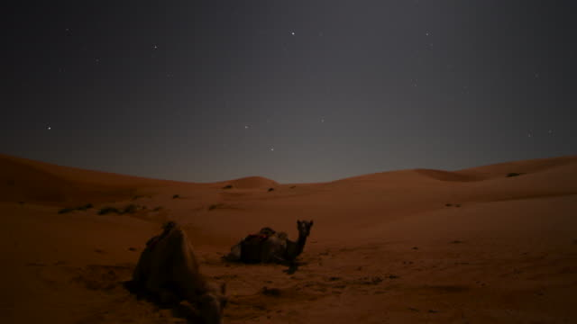 timelapse stars and moon track over camels and sand dunes at night, ibra, oman  - bbc stock videos and b-roll footage