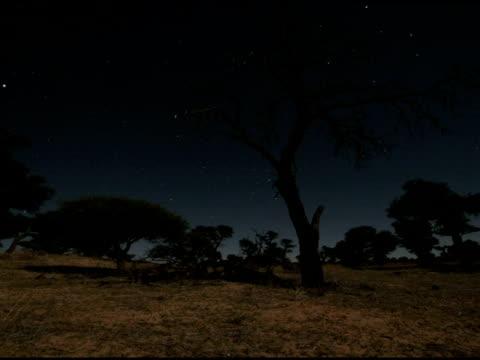 vídeos de stock, filmes e b-roll de timelapse stars and moonfall behind tree, night towards dawn; long exposure. shadow from tree crosses ground, kalahari, south africa - ominoso