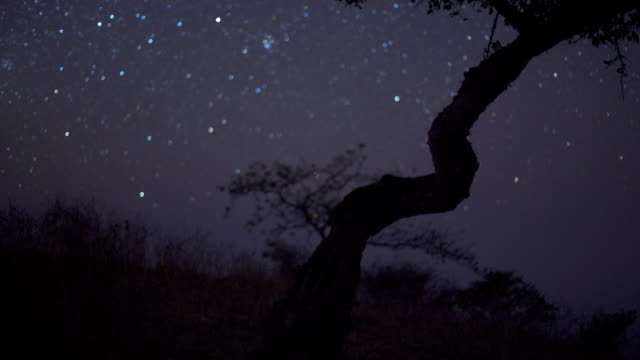Timelapse stars track over tree in desert at night, Dhofar, Oman