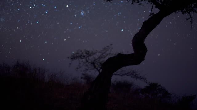 stockvideo's en b-roll-footage met timelapse stars track over tree in desert at night, dhofar, oman - tijdopname