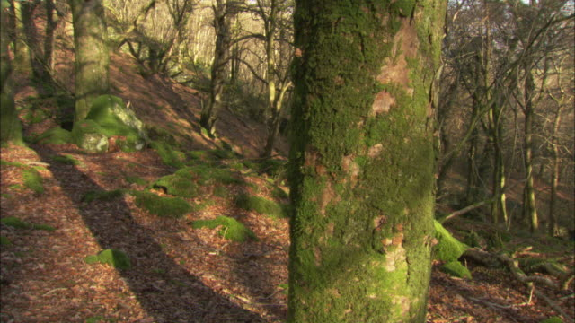 Timelapse sun and shadows move through beech woodland in winter, UK