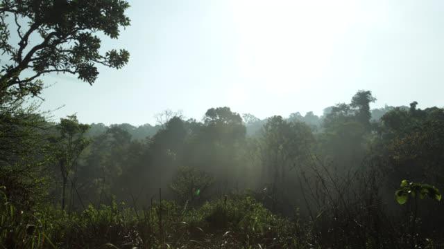 timelapse sun burns away mist over rainforest, megatha, myanmar - myanmar stock videos & royalty-free footage