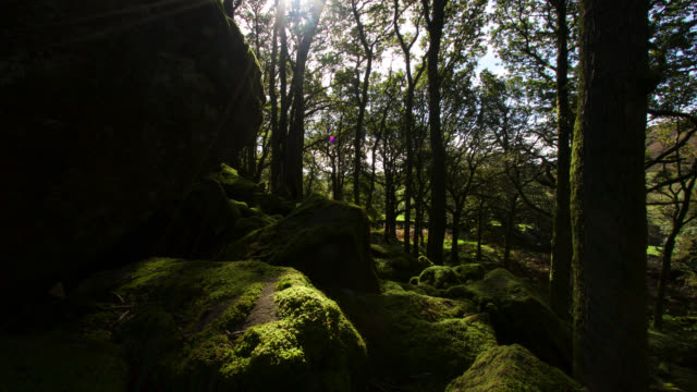 timelapse sun drifts over autumn woodland, lake district, uk - moss stock videos & royalty-free footage