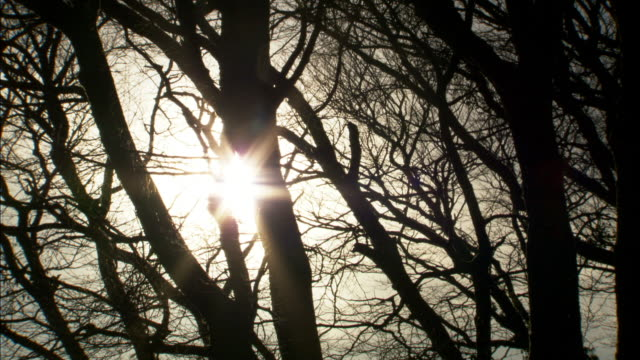 Timelapse sun moves over beech woodland in winter, UK