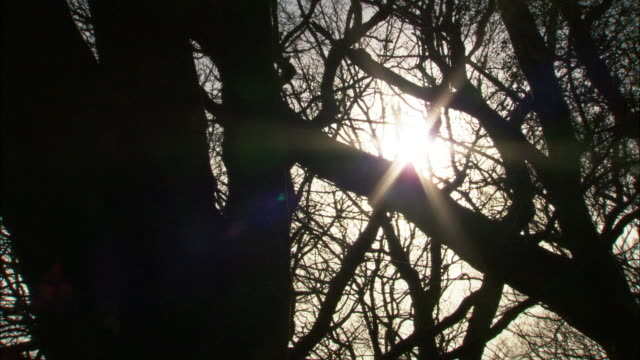 Timelapse sun moves over woodland trees in winter, Wales, UK