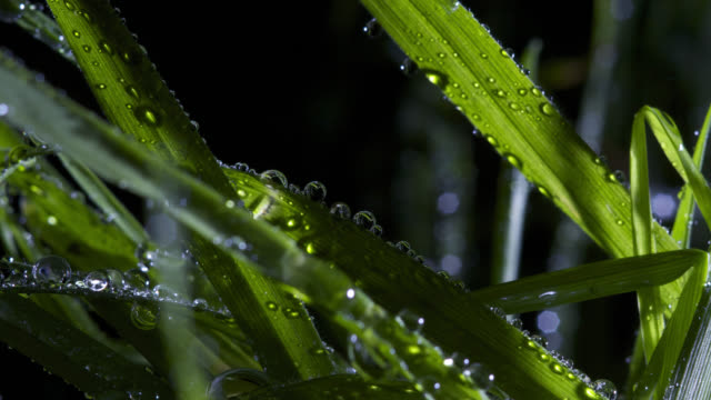 timelapse sun rises over dew droplets on grass leaves, uk - dew stock videos & royalty-free footage