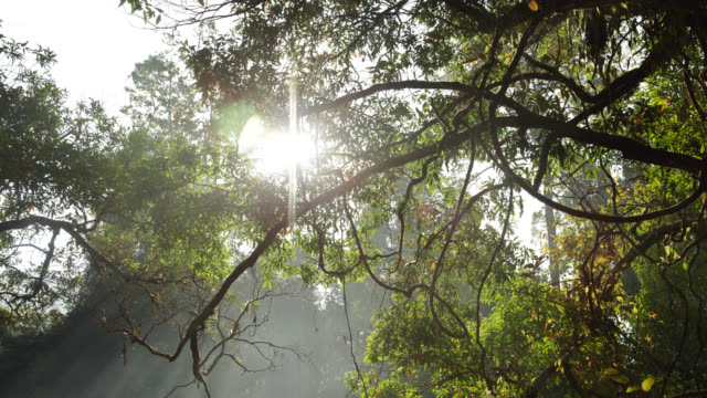 Timelapse sun rises over rainforest camp, Salu, Myanmar