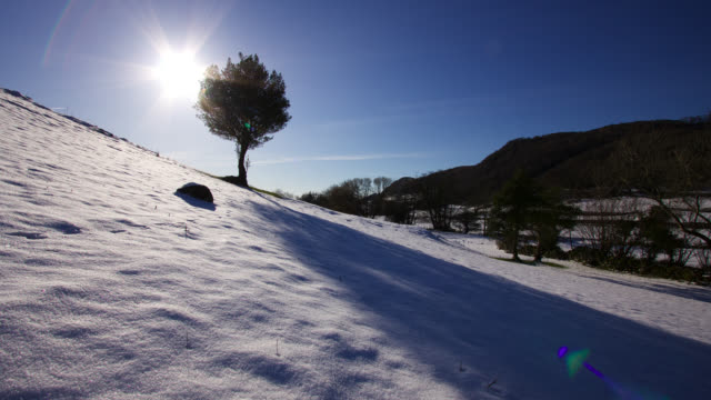 timelapse sun tracks behind lone holly tree on snowy hillside, lake district, uk - english lake district stock videos and b-roll footage