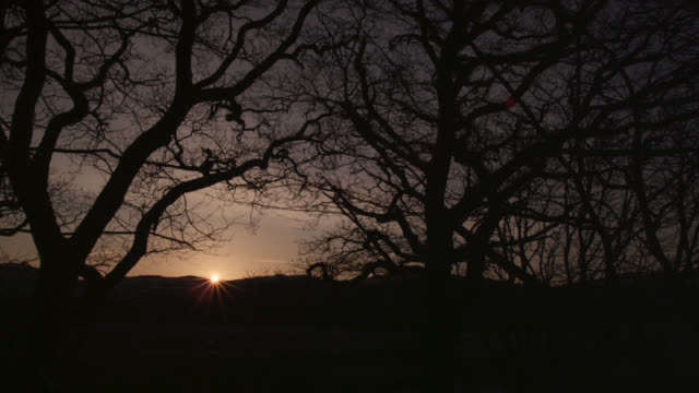 timelapse sunrise over winter woodland, cumbria, england - morning stock videos & royalty-free footage