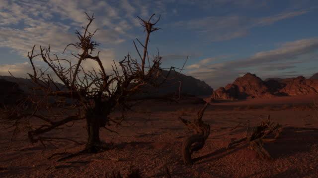 Timelapse sunset over bush in desert, Wadi Rum, Jordan
