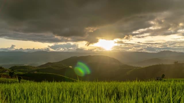 vídeos y material grabado en eventos de stock de timelapse - puesta de sol sobre arroz paddy field con lluvia - campo de arroz