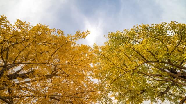 4K Time-lapse: Tachikawa Garden Tokyo Japan with beautiful sky, Apple ProRes 422 (HQ) 3840x2160 Format