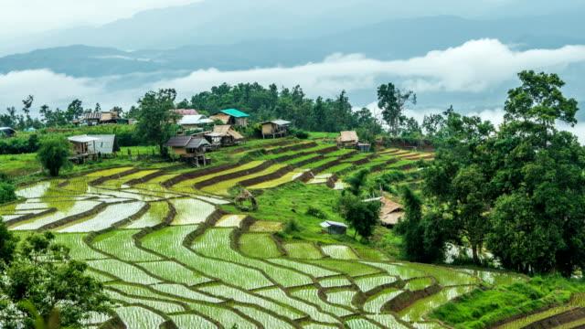 vidéos et rushes de 4k timelapse - rizières en terrasses sur la montagne - rizière