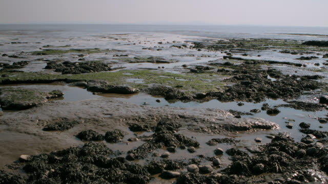 timelapse tide comes in over mud flats, somerset, uk - ocean tide stock videos & royalty-free footage