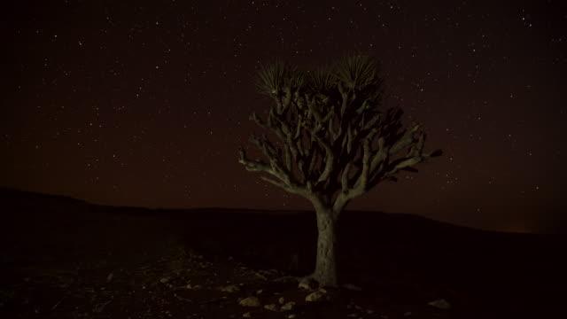 timelapse track as stars drift over dragon blood tree (dracaena), dhofar, oman - dragon tree stock videos & royalty-free footage
