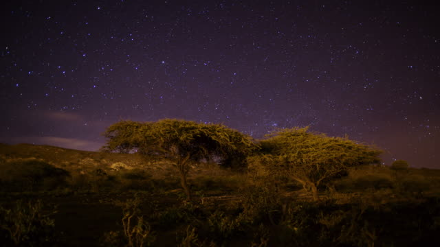 Timelapse track as stars drift through night sky over Acacia trees, Dhofar, Oman