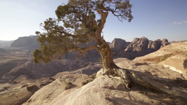vídeos de stock e filmes b-roll de timelapse track past tree on desert cliff, petra, jordan - médio oriente